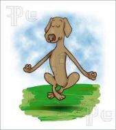levitation dog