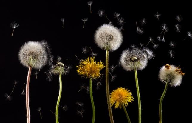 releasing seeds
